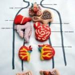 5 Organ Tubuh Misterius